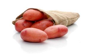 Rosara-01-sadzeniaki-ziemniaka-odmiana-bardzo-wczesna-Solana-Polska